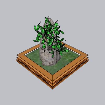 盆景 (3)