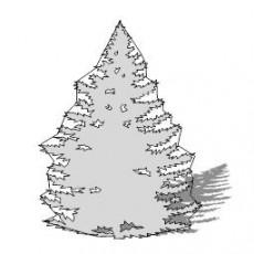 平面乔木_049_景观设计模型