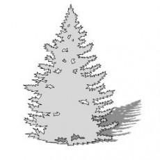 平面乔木_051_景观设计模型