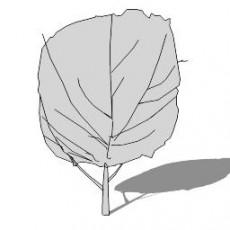 平面乔木_055_景观设计模型