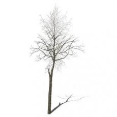 平面乔木_077_景观设计模型
