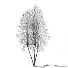 平面乔木_078_景观设计模型