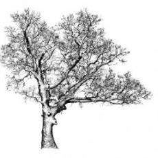 平面乔木_079_景观设计模型