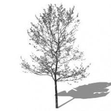 平面乔木_081_景观设计模型