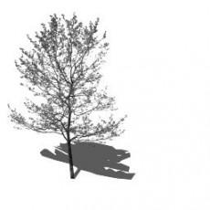 平面乔木_082_景观设计模型