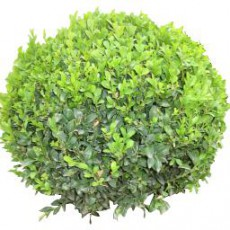 灌木_002_景观设计模型