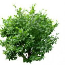 灌木_003_景观设计模型