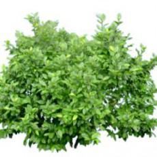 灌木_004_景观设计模型