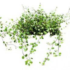 灌木_034_景观设计模型