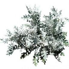 灌木_042_景观设计模型