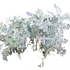 灌木_045_景观设计模型