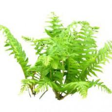 灌木_053_景观设计模型
