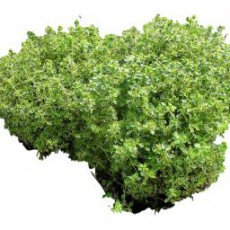 灌木_120_景观设计模型