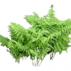 灌木_134_景观设计模型