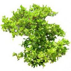灌木_143_景观设计模型