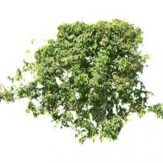 灌木_167_景观设计模型