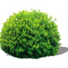 灌木_195_景观设计模型