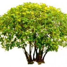 灌木_199_景观设计模型