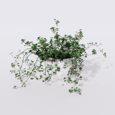 绿植_绿植103_Sketchup模型