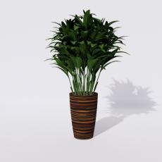 绿植_绿植10_Sketchup模型