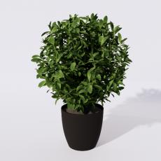绿植_绿植44_Sketchup模型