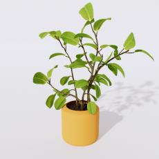 绿植_绿植48_Sketchup模型