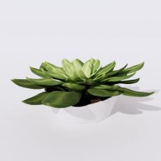 绿植_绿植59_Sketchup模型
