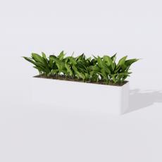 绿植_绿植61_Sketchup模型