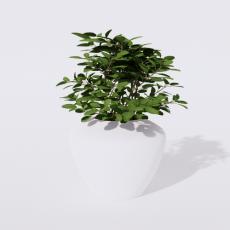 绿植_绿植74_Sketchup模型