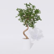 绿植_绿植75_Sketchup模型