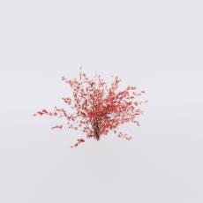 花_花125_Sketchup模型