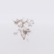 花_花150_Sketchup模型