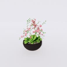 花_花31_Sketchup模型