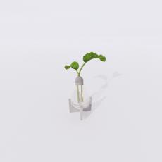 花_花66_Sketchup模型